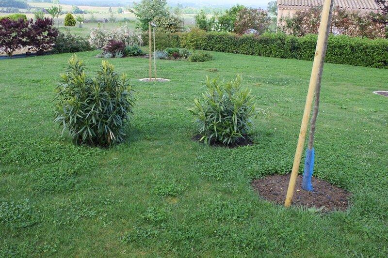 Nouvel air de jeux mon jardin mois apr s mois for Bordure de jardin special tondeuse