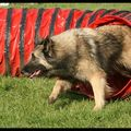 Concours Agility - 18/04/10