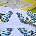 C'est une histoire de papillons.