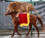 lion_horseriding