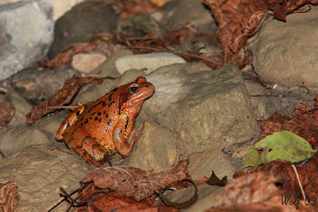 grenouille_sp_09_01