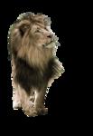 lion-rd