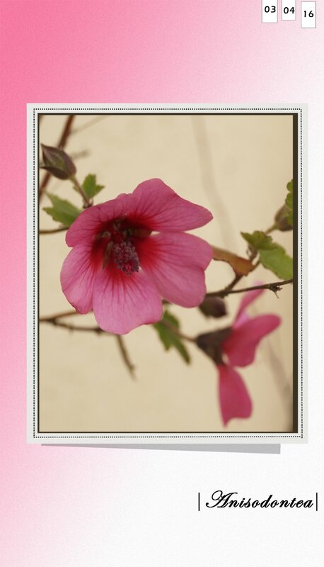 rcathyecré fleurs
