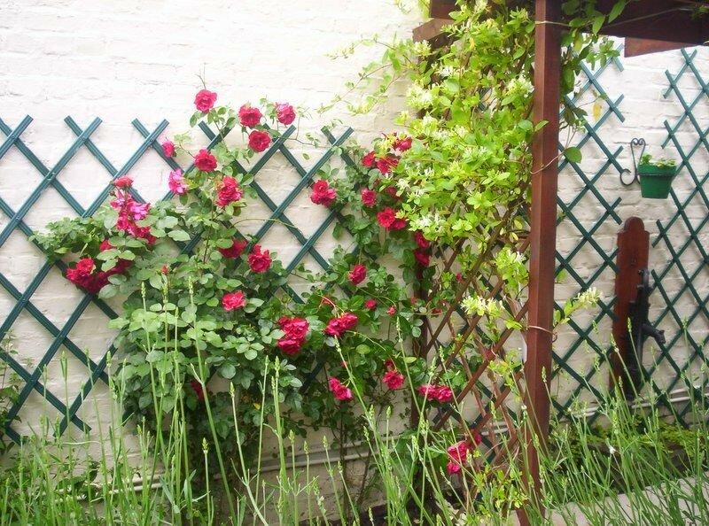 Souvent Celui de mon jardin et les autres ! - gardenstory AF58