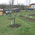 Formation taille arbres fruitiers 2013