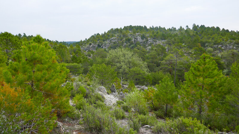 foret (5)