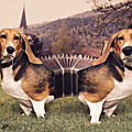 Chien accordeon...infographie by hazoo!