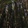 Forest near Brasov