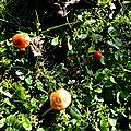 champignon-05911 (9)