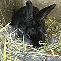 Maman lapine des lapereaux pour