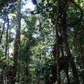 17 oct 09 - Malanda, tree kanguroo (15)