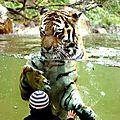 tigre enfant eau358310_n
