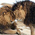 lions38hk2o1_1280
