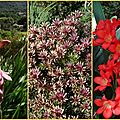 2017-10-09 jardin botanique2