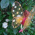 crista fée papillon (2)