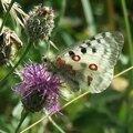 Quelques papillons, dont une photo insolite...