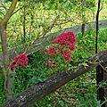 Jardin de la Source 12061644