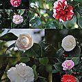 Le jardin des plantes de nantes début mars