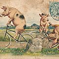 Cochons à bicyclette vintage