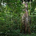sentier_gros_arbre