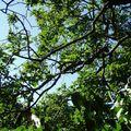 Parc des platanes kaki6