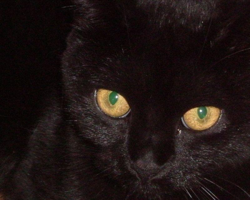 chats de Karine 036