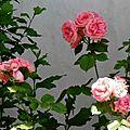1-Fleurs de Léon et Milan noir 230517