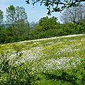 prairie fleurie à Opme