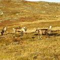 17-10-08 Sortie Montagne et rennes (132)