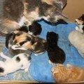 2008 04 07 Papillon et le petits chatons