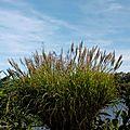 Lac de Mimizan 241017
