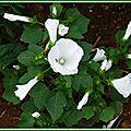 Prairie fleurie 1108153
