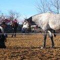 Stage d'équitation éthologique - janvier 2007 - Luberon