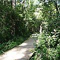 elephant walk, Knysna