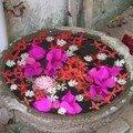 Fleurs de Pondicherry