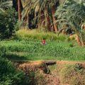 Rives du Nil-3