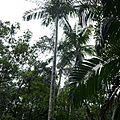 Visite du Florestal Estadual do Palmito