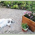 Au jardin,