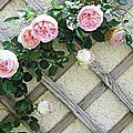 Mon rosier préféré, Pierre de Ronsard