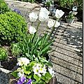 Windows-Live-Writer/Joli-printemps-au-jardin-_601C/20170402_133835_thumb