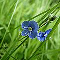 flore sauvage