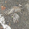 pigeon 31-12-10