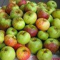 4/4 épicé aux pommes et aux noix