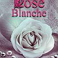 Rose blanche d'amanda bayle