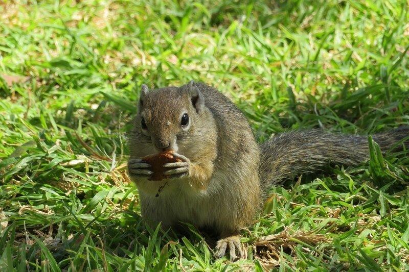 squirrel-2780121_960_720