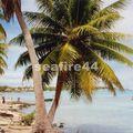 08_plage de Rangiroa_03