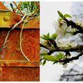 printemps hiver