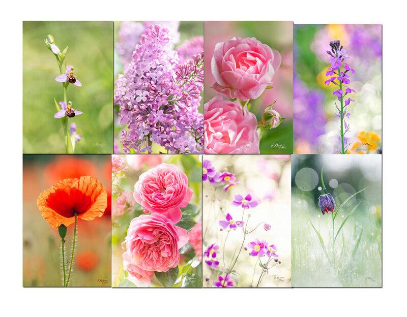 cartes-fleurs-ecologiques01