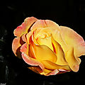 1-Mes roses 2 160518