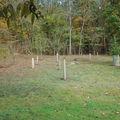 le verger et ses manchons anti-chevreuil en bambous (pépinières Naudet)